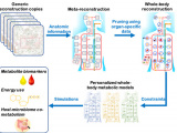 Personalized whole‐body models integrate metabolism, physiology, and the gut microbiome