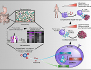 Anti-Tumor Agent from the Intestine