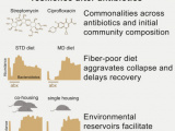 Recovery of the Gut Microbiota after Antibiotics Depends on Host Diet, Community Context, and Environmental Reservoirs